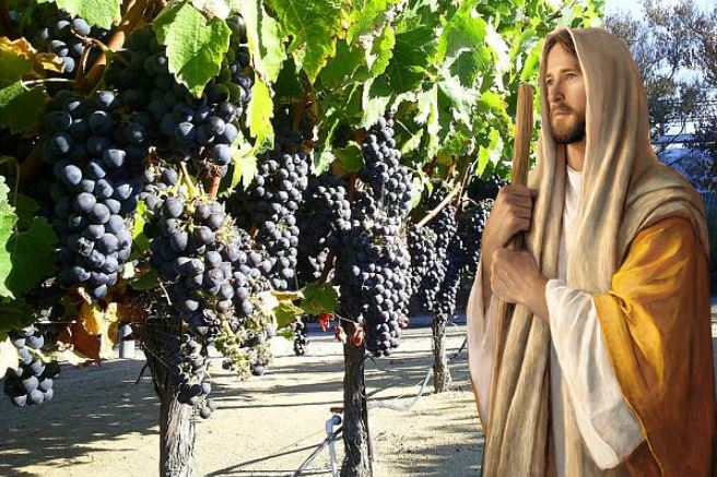 winorosl - Parafia Radzymin