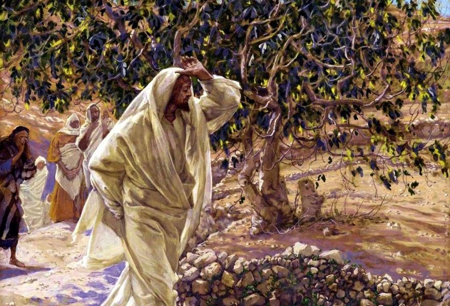 drzewo figowe - Parafia Radzymin